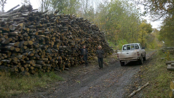 Firewood ready for delivery to the yard