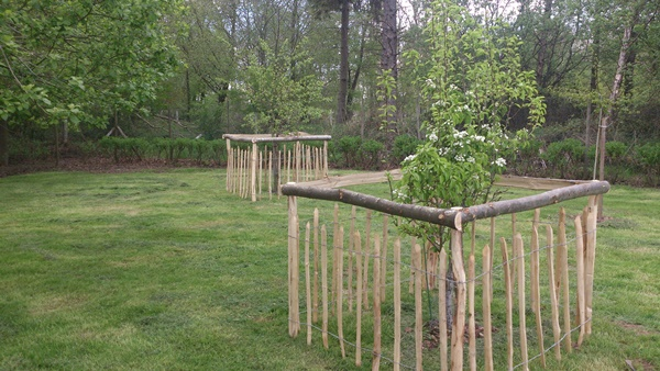 Chestnut paling tree guards for sheep