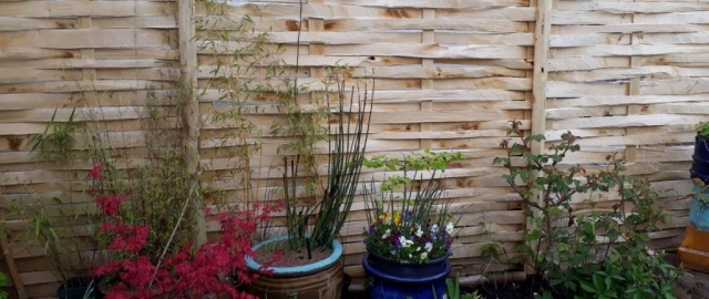 Pretty and practical lath panel fencing