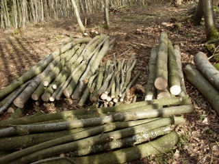 Chestnut poles and posts - Chestnut ready to be turned into fencing