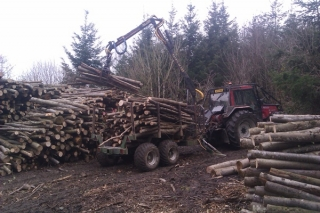 Forwarding timber with our Valmet and timber trailer
