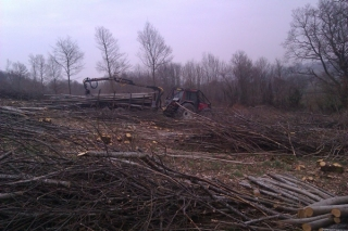 Extracting Chestnut poles after coppicing