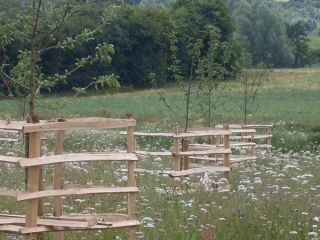 Cleft Chestnut tree guards - These rustic, sturdy tree guards are protecting a newly planted orchard from cattle