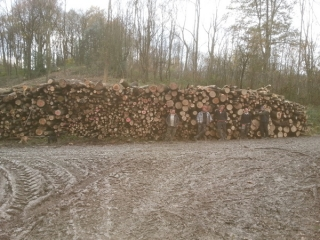 Our forestry team with a firewood harvest from thinning ash trees