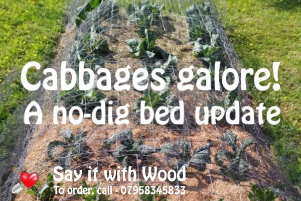 Lockdown gardening tips